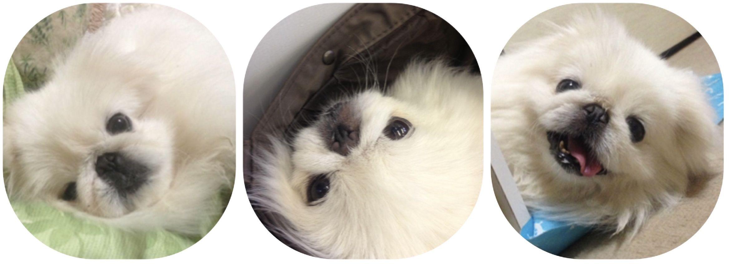 ペットの健康を守るホリスティックケア SINCERE(シンシア)